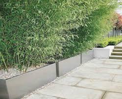 bambus fã r den balkon garten bambus sichtschutz treefunder co