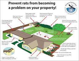 rats msmvcd marin sonoma mosquito u0026 vector control district