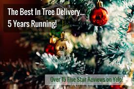 boston christmas tree delivery evergreen delivery boston