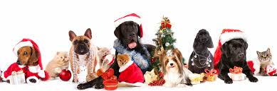 pet christmas the twelve dogs and cats of christmas four muddy paws a self