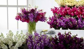farm fresh flowers types of farm fresh flowers about our flowers ftd