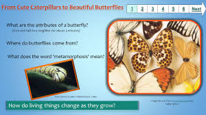 what are the attributes of a butterfly turn and to a