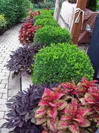 Flower Shrubs For Shaded Areas - best 25 bushes and shrubs ideas on pinterest shrubs