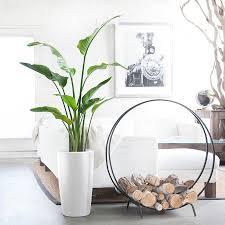 large indoor plants 5 u0027 6 u0027 potted in modern planters