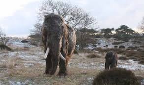 woolly mammoth calf manimal works primeval flora