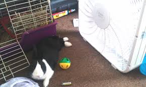 Air Conditioned Rabbit Hutch How To Beat The Heat Bunny Blurbs