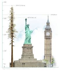 height comparisons meet the tallest tree in the world