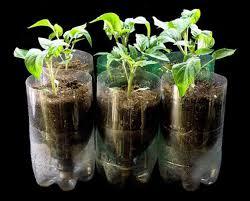 cara membuat cairan hidroponik cara membuat tanaman hidroponik dari botol aqua bekas bibitbunga com