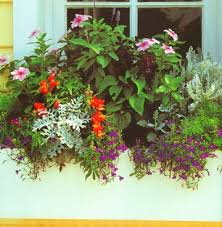 What To Plant In Window Flower Boxes - the impatient gardener how to plant a rockin u0027 window box
