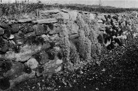 the project gutenberg ebook of making a rock garden by h s adams