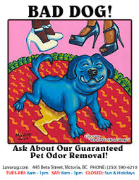 Area Rugs Victoria by Area Rug Carpet Cleaning Victoria Bc Luv A Rug Services