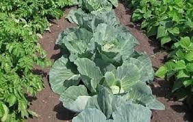 What Type Of Soil For Vegetable Garden - vegetable gardens howstuffworks