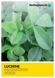 lucerne production guide by heritage seeds issuu