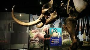 landmark genetic analysis identifies woolly mammoth adapted