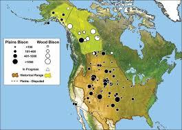 map of america 20000 years ago bison belong