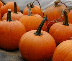feed the bees with a halloween pumpkin patch high mowing organic