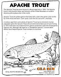 arizona state fish apache trout