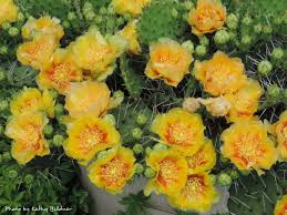 wild ones native plants 5812 amy drive edina mn 55436 mls 4836430 edina realty