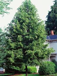 selecting trees for your yard better homes gardens