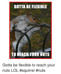 Squirrel Nuts Meme - gotta be flexible to reach your nuts gotta be flexible to reach your
