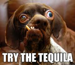 Funny Tequila Memes - try the tequila ugly advice dog quickmeme