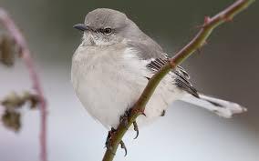list of birds of south carolina wikipedia