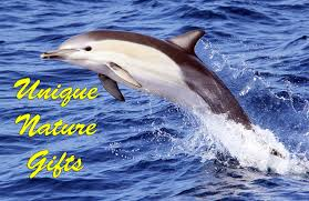 unique dolphin gifts dolphin images unique gifts