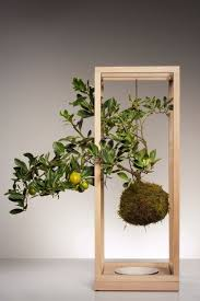 306 best kokedama the japanese moss ball plant images on