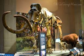 discover learn and enjoy the perot museum in dallas