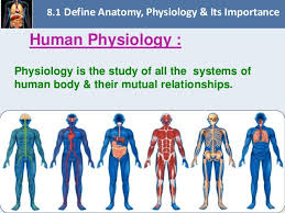 Human Anatomy And Physiology Pdf File Chapter 8 Fundamentals Of Anatomy And Physiology