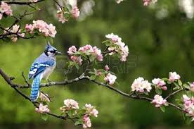 bird on branch stock photos royalty free business images