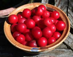 dining wild wild plums of missouri u2014 cherished native fruits