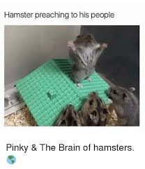 Pinky And The Brain Meme - hamster preaching to his people pinky the brain of hamsters