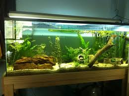 Decorations  Contemporary Aquascape Aquarium With Two Side View - Home aquarium designs