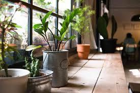 zimmerpflanzen im schlafzimmer gut für klima u0026 wohlbefinden