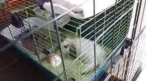 Rabbit Hutches For Indoors Rabbit Indoor Cage Set Up For Small Space Daisy Jasper U0027s Cage