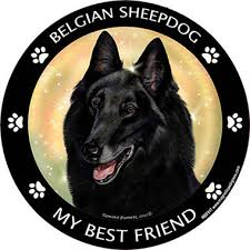 belgian sheepdog 101 my best friend magnet belgian sheepdog 99880 pet valu