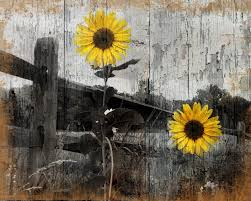 rustic sunflower country farmhouse home wall art decor matted