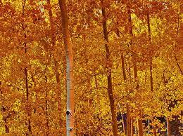 best orange color best time for fall colors in arizona u2013 arizona tourism