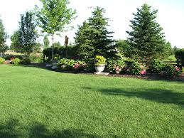 best privacy trees cheap for sale fast growing utah
