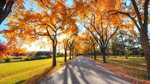 1920x1080 fall wallpaper download wallpaper 1920x1080 autumn alley park trees full hd