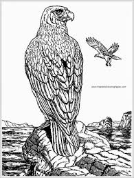 eagles lions of the sky coloring pages birds pinterest