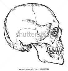 vector sketch side view skull stock vector 331133276 shutterstock