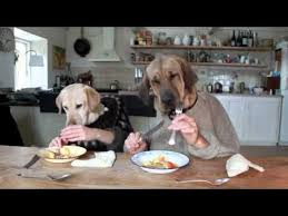 Dog Cooking Meme - coolest cooking memes two dogs dining youtube cooking memes jpg