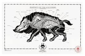 Heart External Anatomy Anatomy Of Rabbit Gallery Learn Human Anatomy Image
