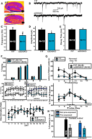 tonic inhibitory control of dentate gyrus granule cells by α5