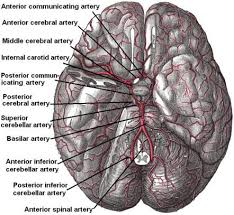 Vascular Anatomy Of The Brain Middle Cerebral Artery Radiology Reference Article Radiopaedia Org