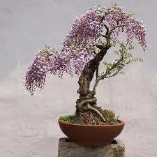 aliexpress buy 15 particles bag mini bonsai pink