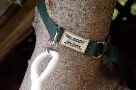 hammock tree hugger straps swings and things san diego