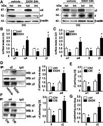 α2 subunit u2013containing gabaa receptor subtypes are upregulated and